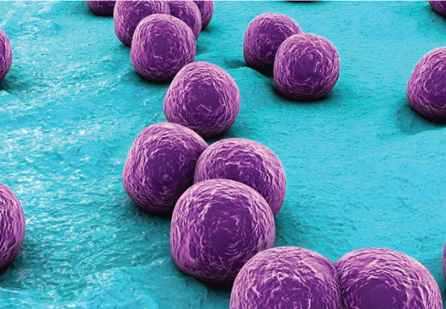 Staph Food Poisoning And Other Bacterias